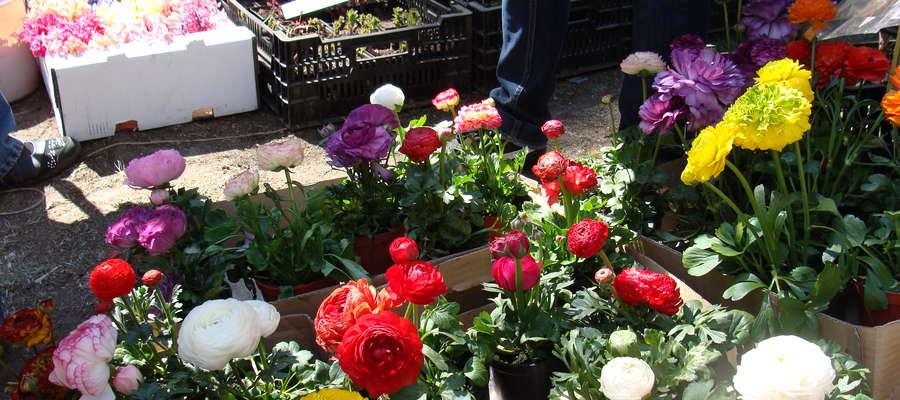 """Wiosenne Targi Ogrodnicze """"Pamiętajcie o ogrodach"""" już na stałe wpisały się w kalendarz wiosennych imprez w Olsztynie. Pierwsze odbyły się w 2009 roku"""