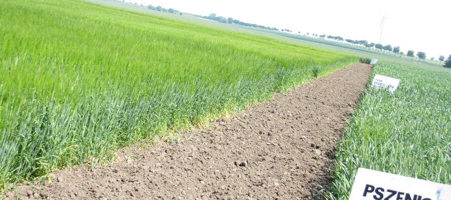 Według nowej ustawy nabywcą ziemi rolnej może być tylko rolnik indywidualny osobiście gospodarujący gruntami do 300 ha, mający kwalifikacje rolnicze i mieszkający co najmniej od 5 lat na terenie gminy, na której położona jest co najmniej jedna działka jeg