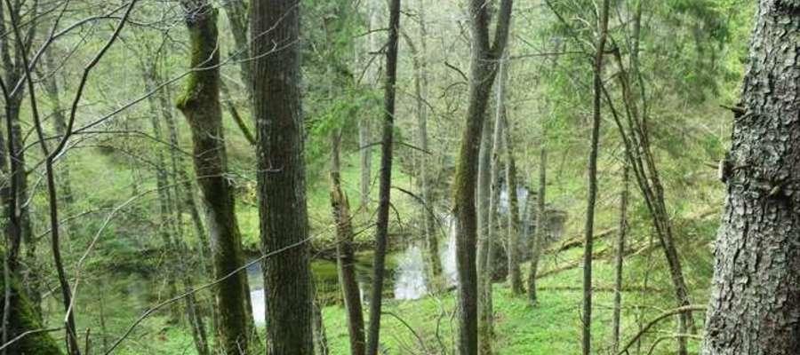 Łyna w tajemniczy sposób wije się przez malownicze lasy Warmii. To ona nadaje urok Bartągowi