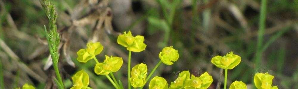Mazury: maj na żółto i na złoto