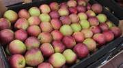 Rozdadzą 20 ton jabłek
