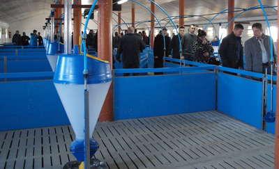 Otwarcie chlewni w gminie Lutocin - nowy obiekt na 1 500 tuczników