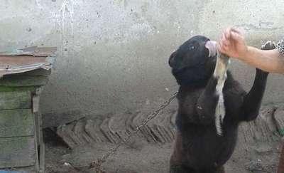 Łańcuch zaciśnięty na szyi i buda bez podestu. Zaniedbane psy w gospodarstwie pod Pieniężnem