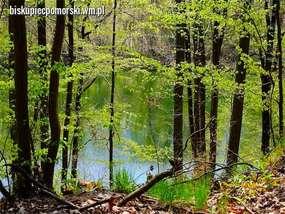 Jezioro Głowin otoczone ciekawymi lasami