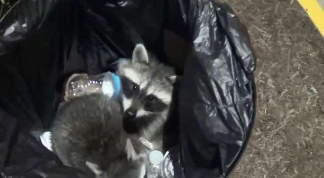 Szopy utknęły w koszu ma śmieci - full image