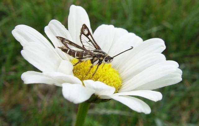 Motyl nie przerwał uczty nawet pozując do zdjęć - full image