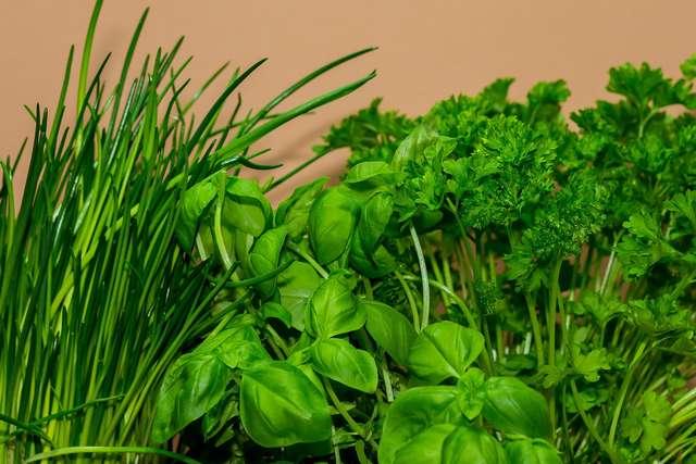 Jakie właściwości skrywają w sobie zioła? - full image
