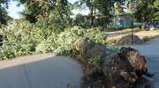Wichura w Bisztynku. Strażacy usuwali  połamane drzewa