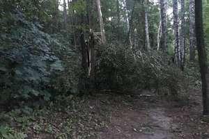 Powalone przez wiatr drzewa tarasują szlak rowerowy Olsztyn-Dywity
