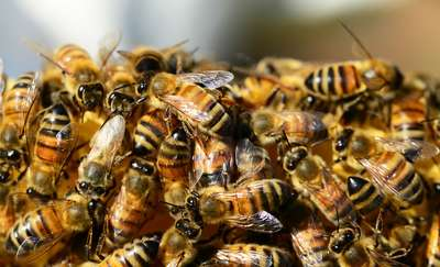 """Konferencja pt. """"Zatrucia pszczół""""  już 30 marca w WMODR w Olsztynie"""