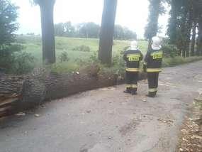 Drzewo powalone w okolicach Sątop.