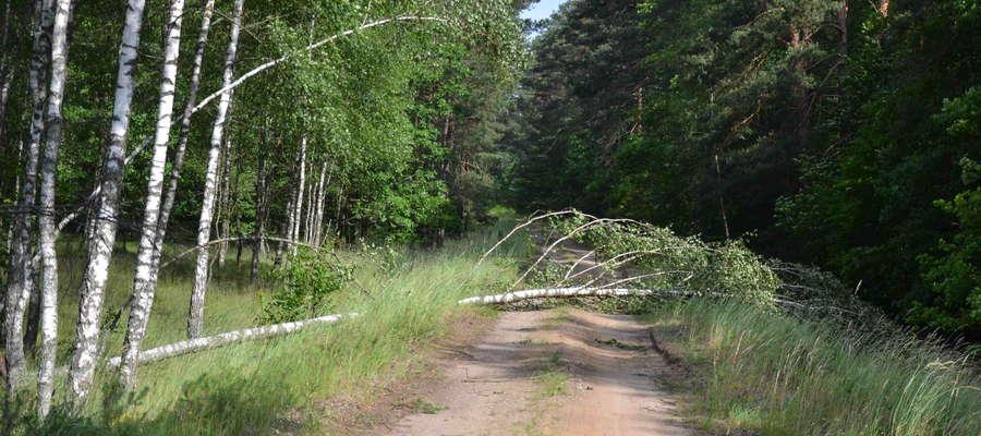 Miejscami zwalone drzewa tarasują ścieżki na całej szerokości
