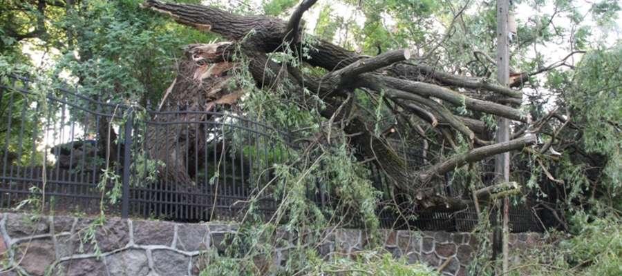 Powalone drzewo na ulicy Górnej w Giżycku