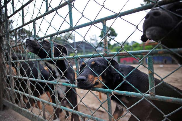 Kochać, a nie posiadać. Rasowe zwierzęta lepsze od bezdomnych? - full image