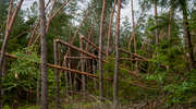 Ogromne straty w Nadleśnictwie Giżycko. Wprowadzono zakaz wstępu do lasu w kliku leśnictwach