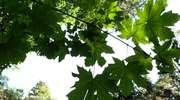 Monitoring w lasach w powiecie olsztyńskim