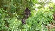Jankes odnalazł w lesie zaginionego grzybiarza