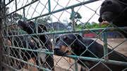 Dramatyczny list: Bez śladu giną psy w okolicy. Jeden został przecięty na pół