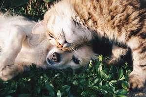 Pochwal się swoim psem i kotem!