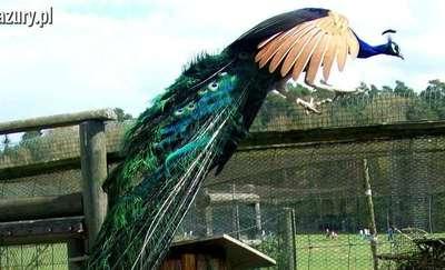 Tu warto się zatrzymać: Park Dzikich Zwierząt w Kadzidłowie
