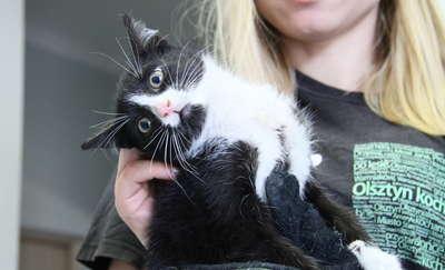 Kotek wyrzucony z auta w centrum Olsztyna zginął pod kołami. Pomóż ustalić sprawcę!