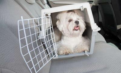 Pies to pasażer, o którego trzeba zadbać