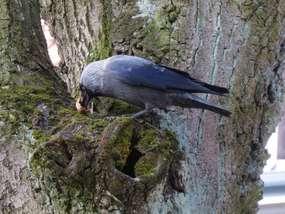 Ptaki wokół jeziora Czos