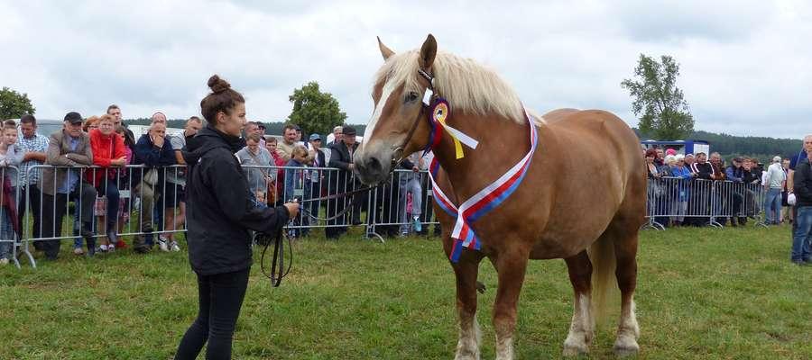 Kilta,najlepszy koń tegorocznej wystawy oraz czempionka prezentowana przez swoja opiekunkę
