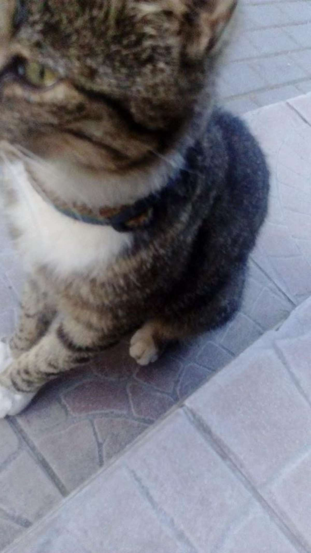 Kociak błąka się po Gwiździnach