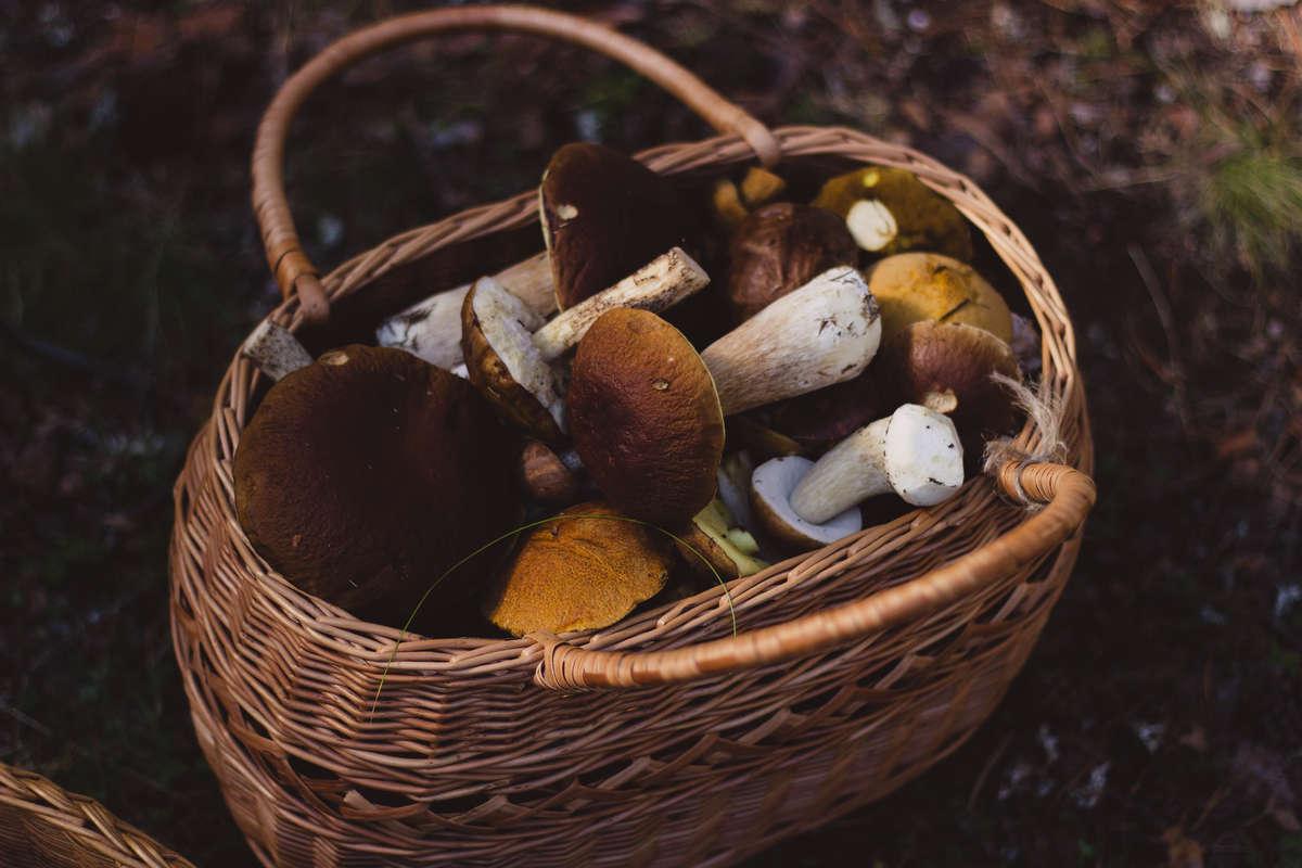 Jak postępować podczas zatrucia grzybami? - full image