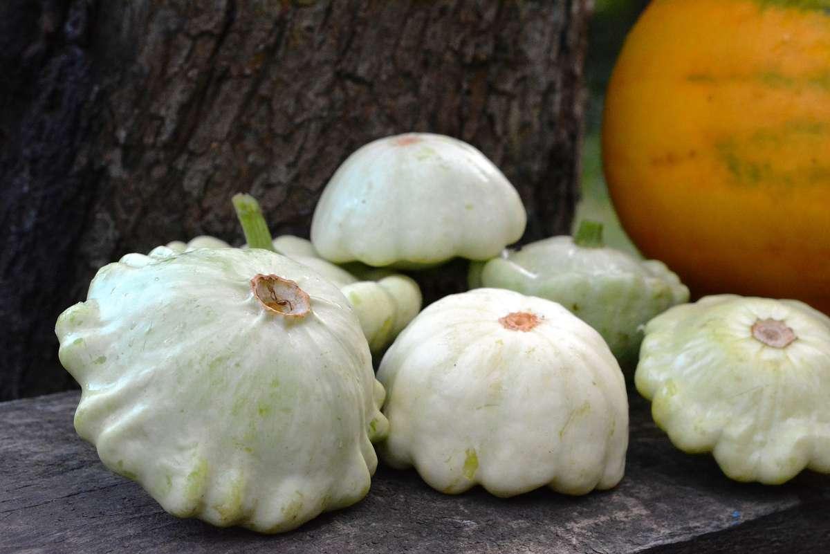 Patison - zdrowe warzywo o oryginalnym kształcie - full image