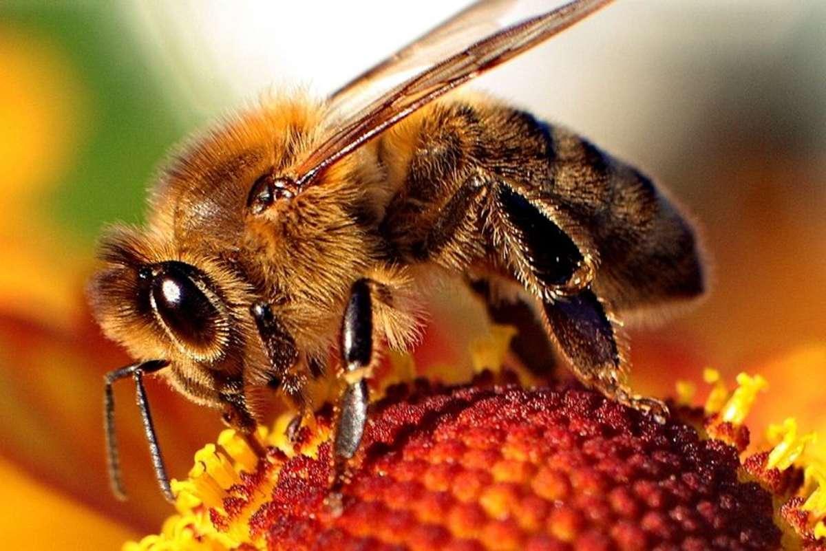 Gdy nagle użądli nas pszczoła - full image