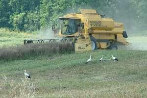 Skarg na rolników jeszcze nie ma. Rozpoczęły się żniwa, będzie się kurzyło