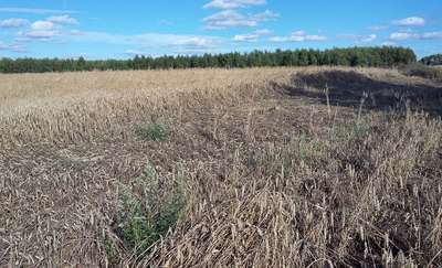 Warmińsko–mazurscy rolnicy wnioskują o uznanie klęski w rolnictwie