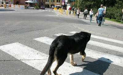 Potrącił psa i cofnął, żeby go dobić. Policja prosi świadków o kontakt