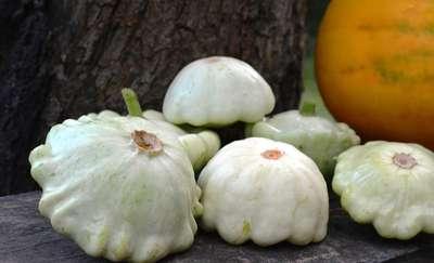 Patison - zdrowe warzywo o oryginalnym kształcie