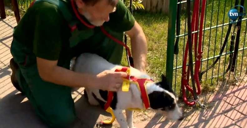 Weź psa ze schroniska przynajmniej na spacer - full image