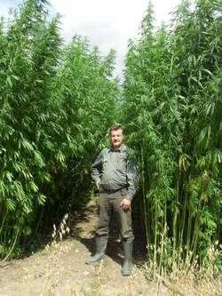 Abc uprawy marihuany