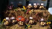 W Kraplewie znów będziemy obchodzić ziemniaczane święto