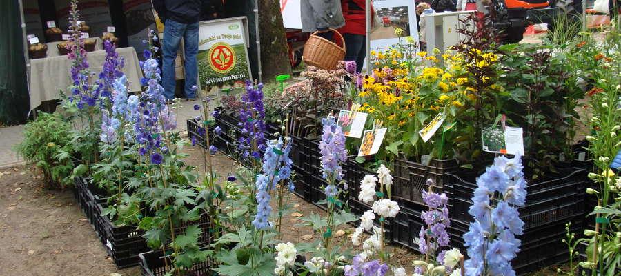 W bogatym programie targów znajdzie się pokaz: roślin oraz artykułów szkółkarskich, i ogrodniczych, oraz zabudowy, wyposażenia i aranżacji ogrodów.