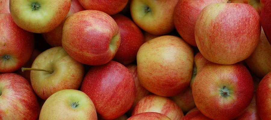 Polscy sadownicy mogą już sprzedawać jabłka do Kanady, a wkrótce także do Chile