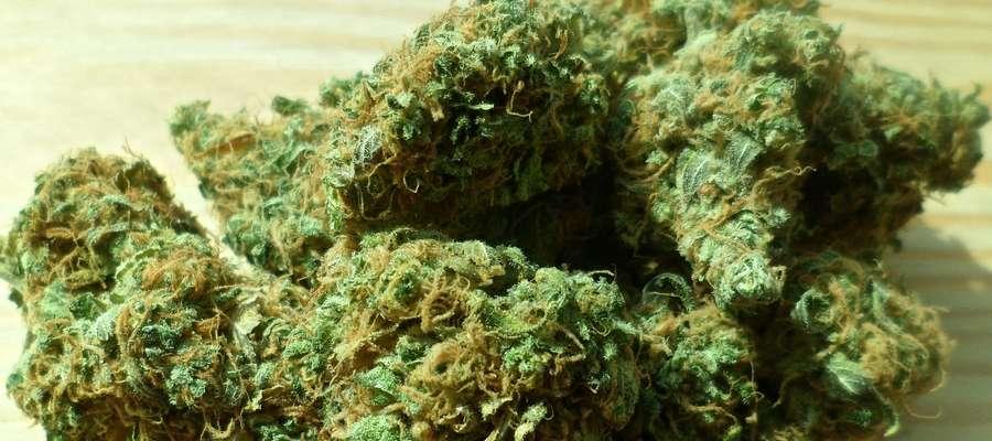 W chipsach znajdziemy pochodne kanabinoidów, występujących naturalnie w marihuanie