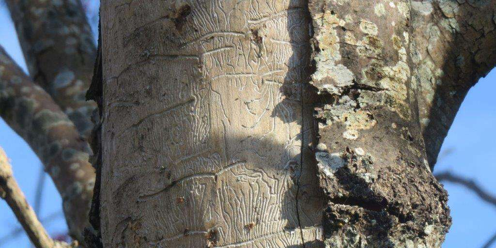 Jesiony umierają stojąc, czyli śmierć zapisana w hieroglifach - full image