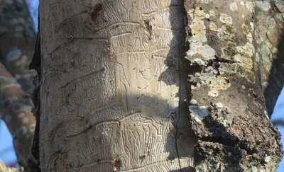 Jesiony umierają stojąc, czyli śmierć zapisana w hieroglifach