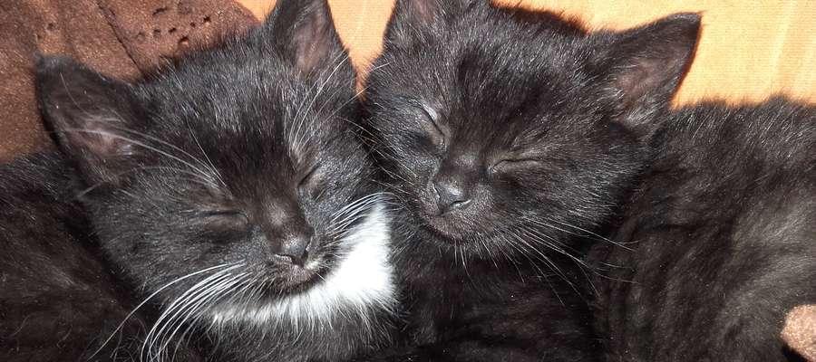 Szukamy domu dla dwóch małych kotek