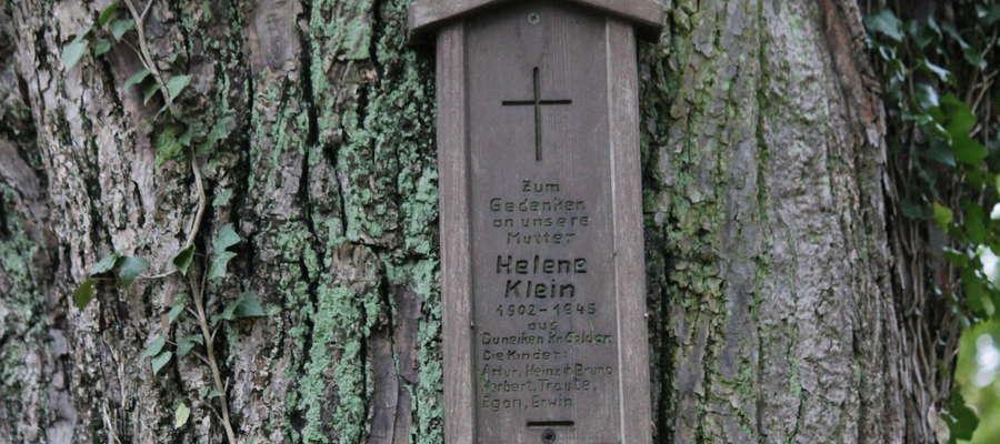 Dzieci Heleny Klein nie znalazły grobu swej mamy więc upamiętniły ją drewniana tablicą przymocowaną do drzewa.