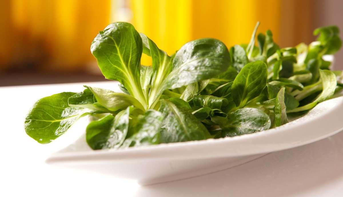 Roszponka - mała sałata, wiele właściwości odżywczych - full image