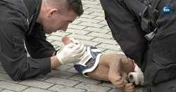 Policjanci uczyli się pomagać psom służbowym