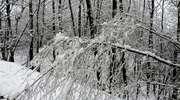 Sypnęło śniegiem pod Nawrą