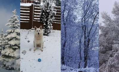 Na całej połaci śnieg! Zobacz najpiękniejsze zdjęcia zimy z regionu